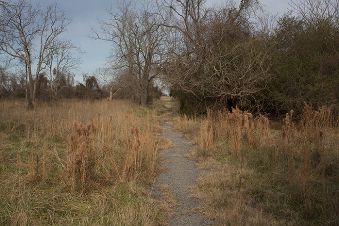 A path through what was once Slabtown, Yorktown, VA, December 31, 2012