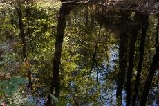 Great Dismal Swamp, Suffolk, VA, October 20, 2013